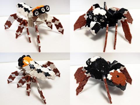 Spider5_IMG_w480s06.jpg
